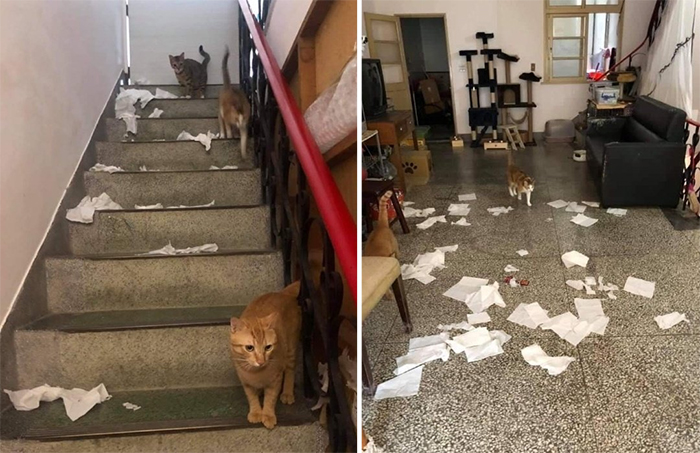 hungry cats shredding toilet papers