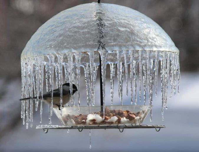 icy-bird-umbrella-intersting-things-VigoreousePatate