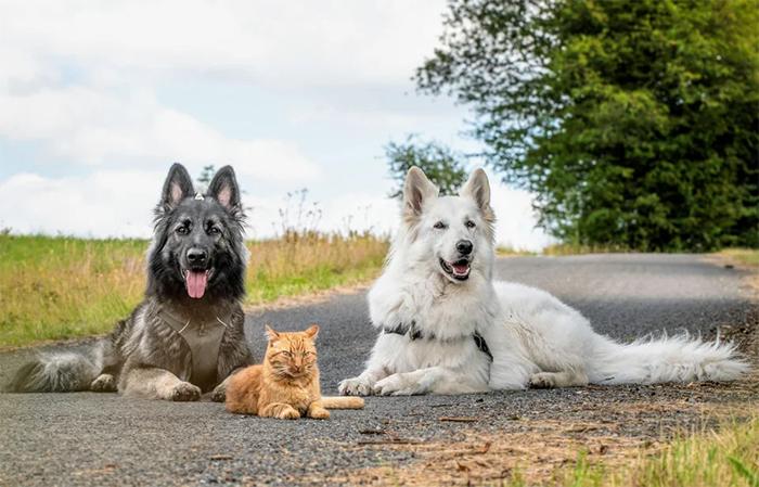 kitten raised by dogs