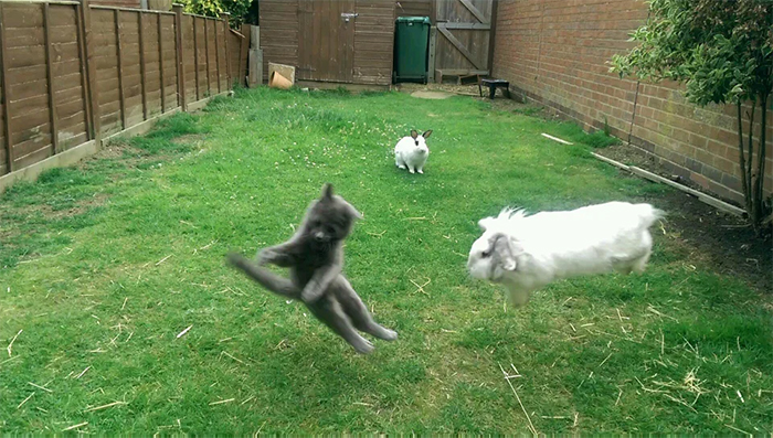 lawn war kitten vs rabbits