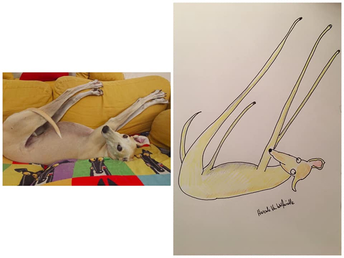 lousy animal drawings bones