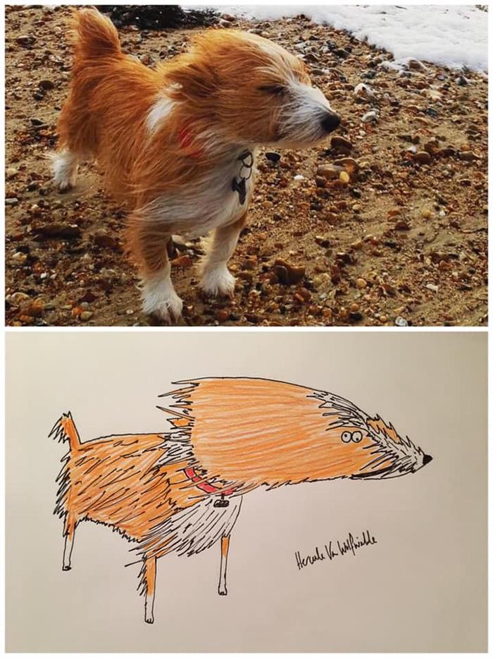 lousy animal drawings ernie