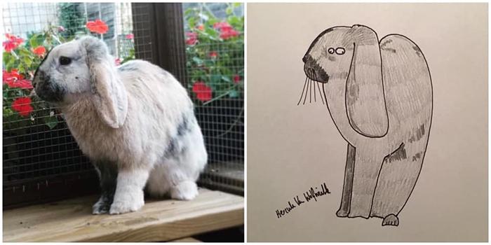 lousy animal drawings justin sharples