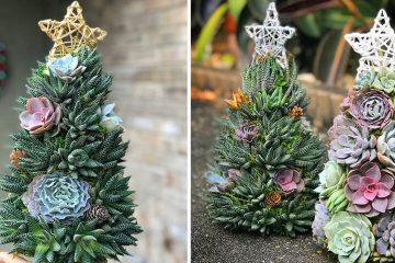 mini Succulent Christmas Trees