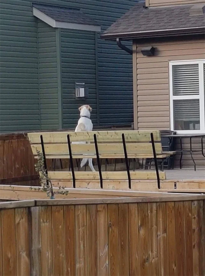neighbor dog sitting on a bench