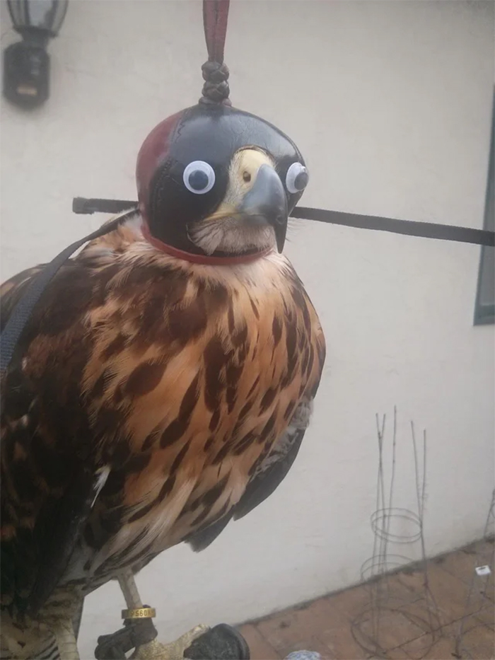 noble raptor with googly eyes