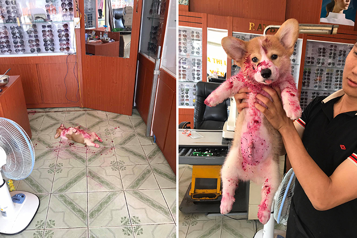 pets almost give owners heart attack dog dragon fruit