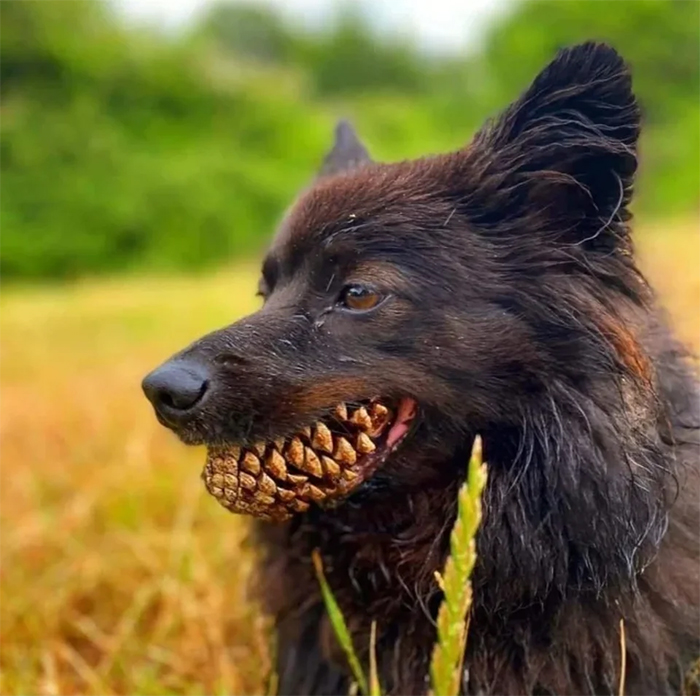 pets almost give owners heart attack dog pine teeth