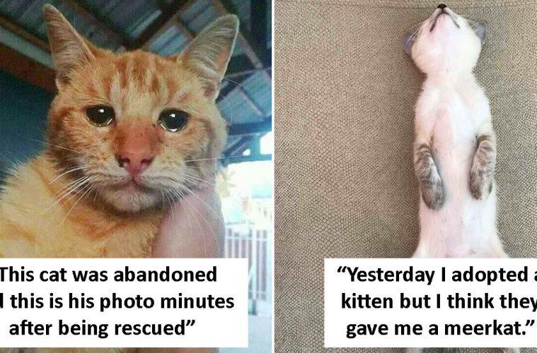 rescue pet photos