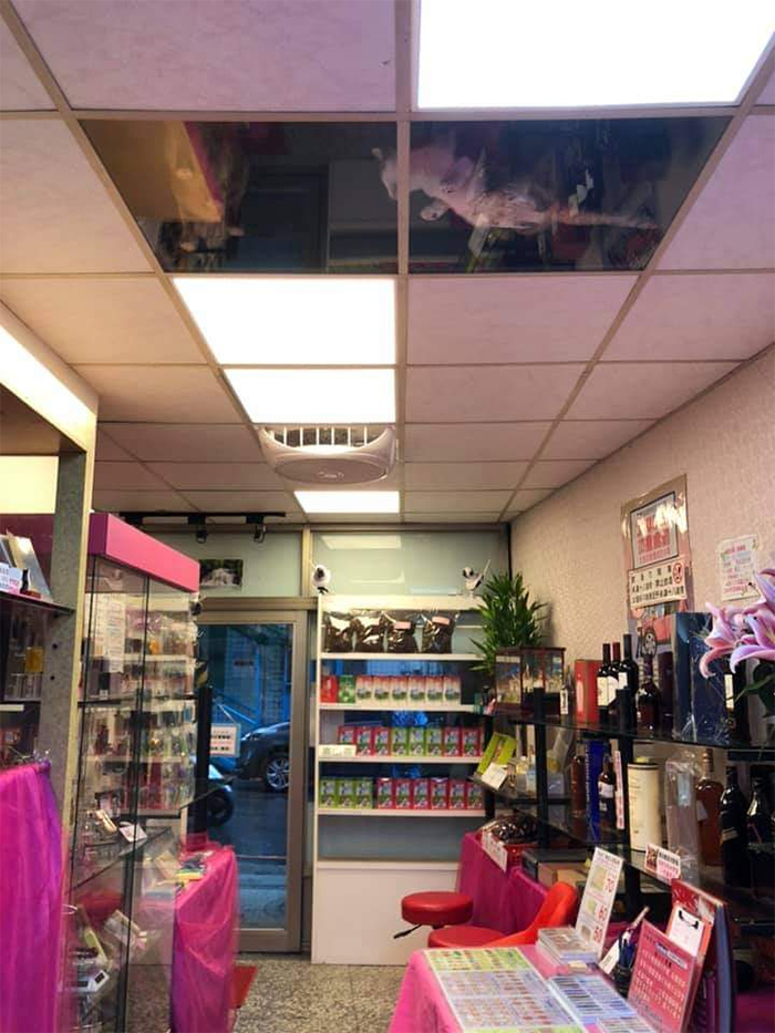 shop owner glass ceiling for cats