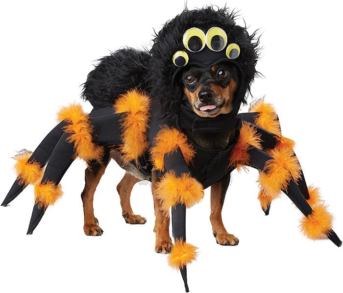 tarantula dog costume for halloween