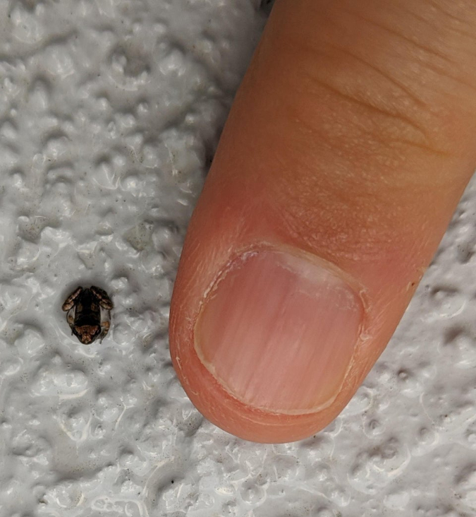 tiniest-frog-interesting-things-okgodlemmehaveit