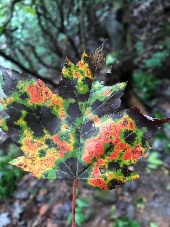 weather-radar-leaf-omgyoucunt