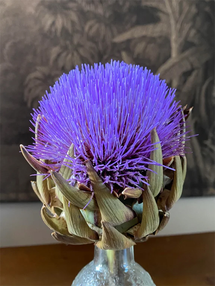 what happens if you do not eat artichoke right away