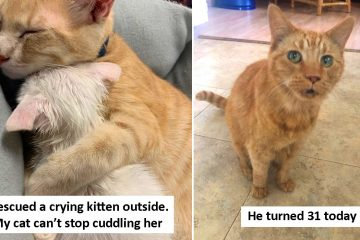 wholesome cat photos