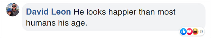 yulelogs birthday comment david