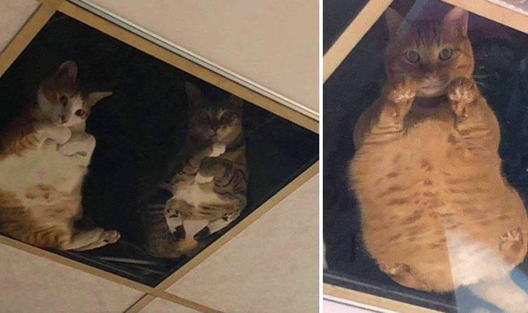 Glass Ceiling For Cats