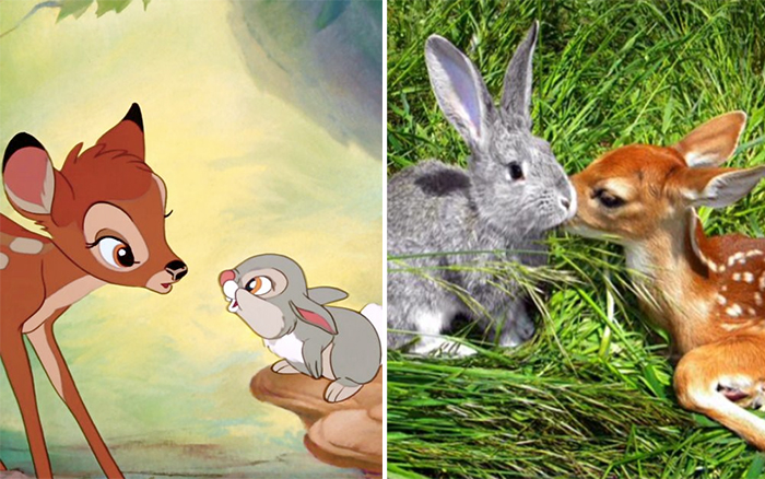 animals recreate disney characters bambi and thumper