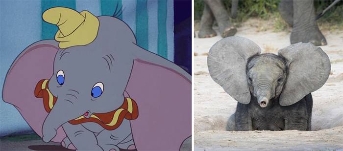 animals recreate disney characters dumbo