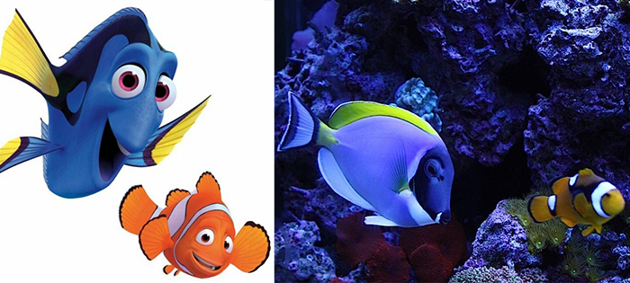 animals recreate disney characters marlin and dory