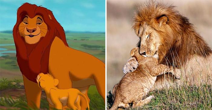 animals recreate disney characters mufasa and simba