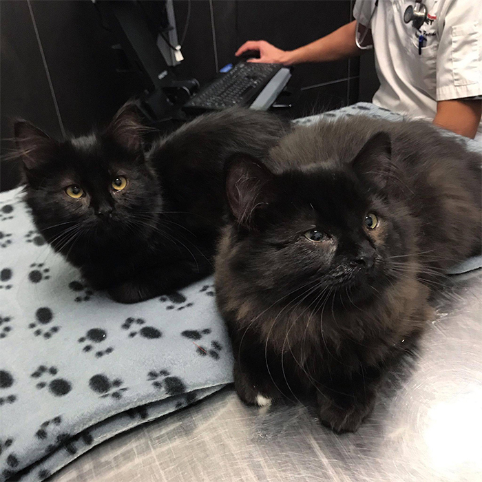 black kittens taylor and tales