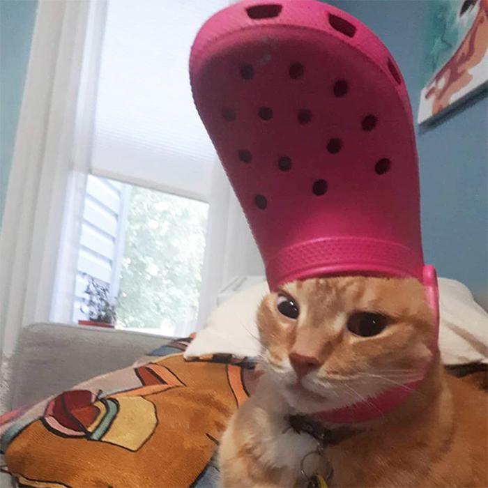 cat wearing a pink croc hat