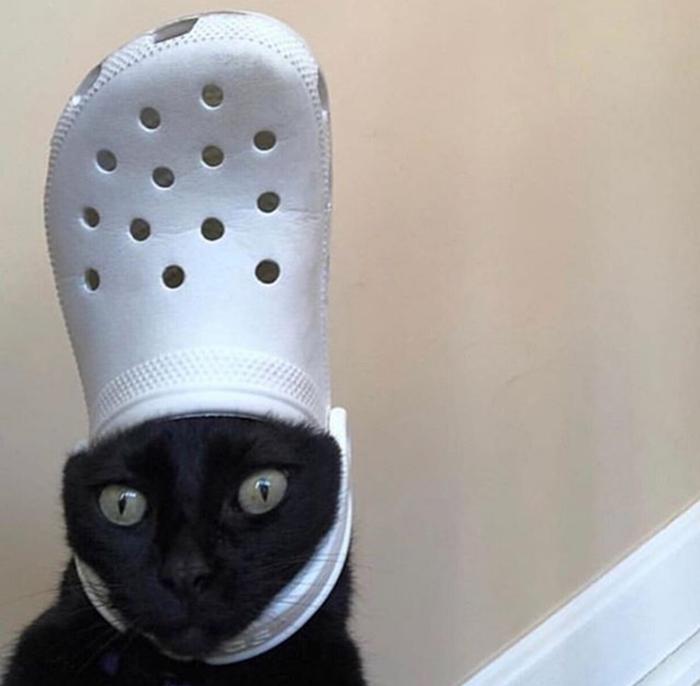cat wearing a white croc hat