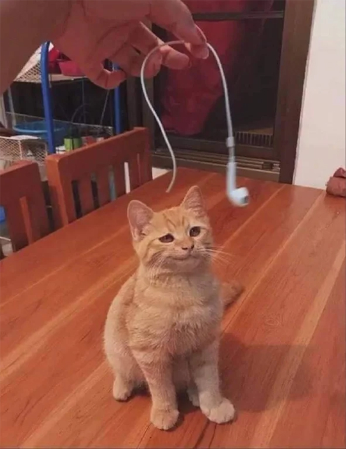 cats being jerks earphone destroyer