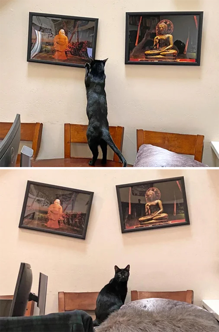 cats being jerks fixes picture frames