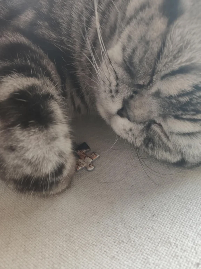 cats being jerks hides jigsaw puzzle piece
