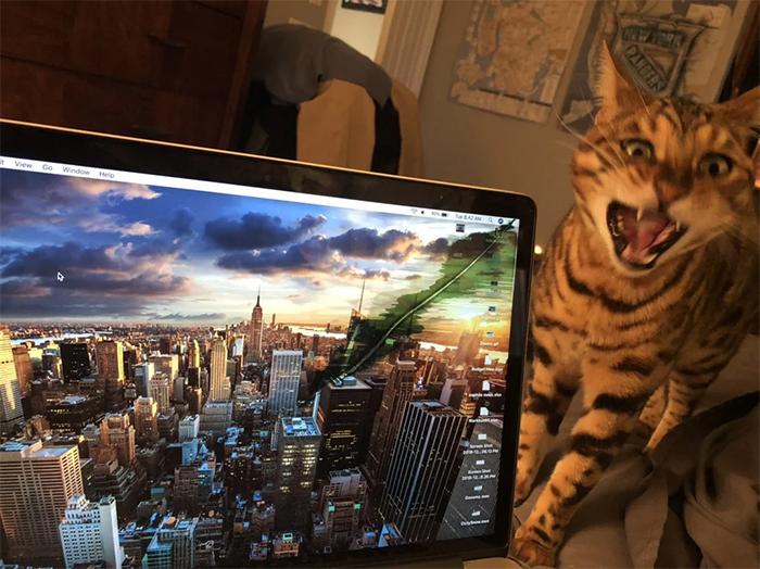 cats being jerks macbook destroyer