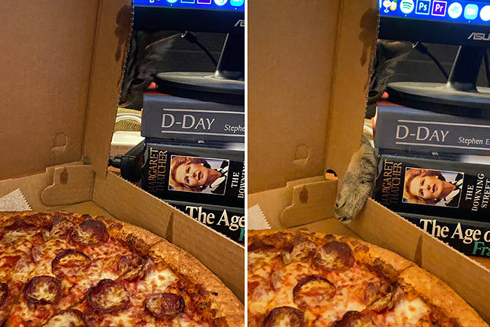 cats being jerks pizza thief