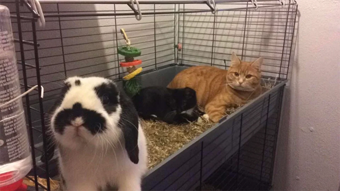 cats invade bunny cage
