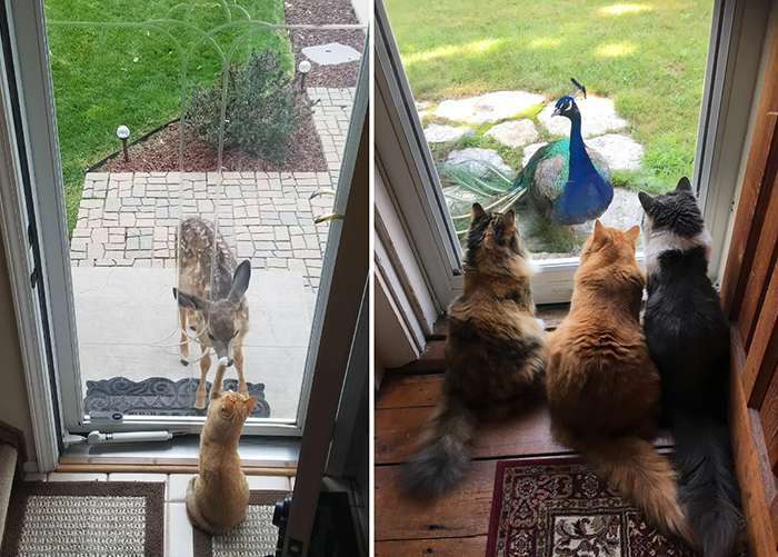 cats meet unusual friends