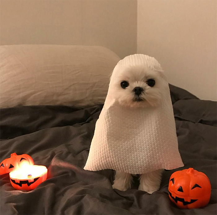 cute dog dressed up as ghost