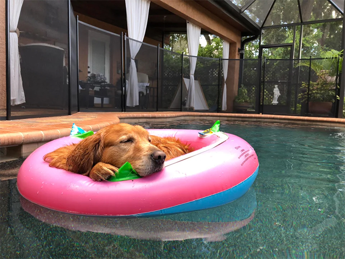 dog chilling on a pool inflatable