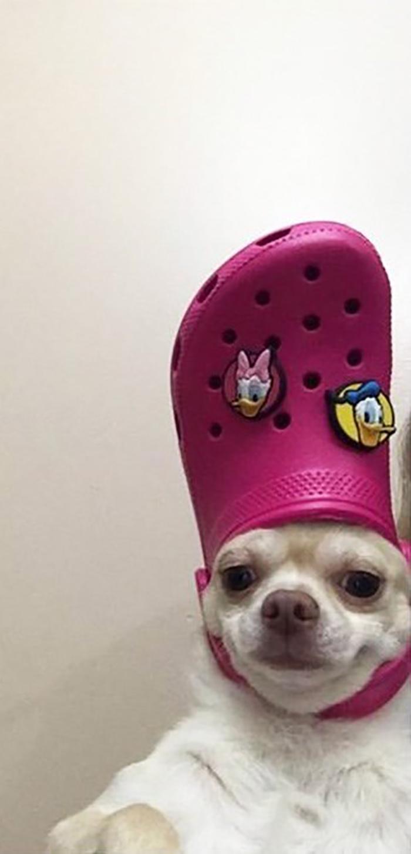 dog wearing a pink croc hat