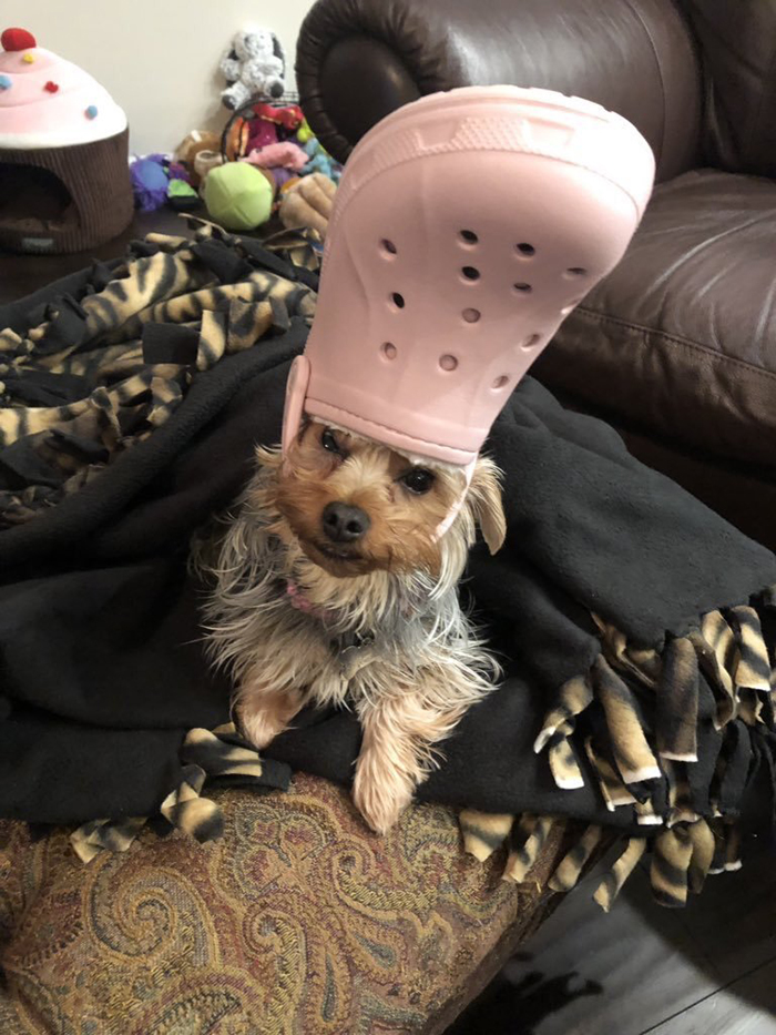 dog with a pink croc hat
