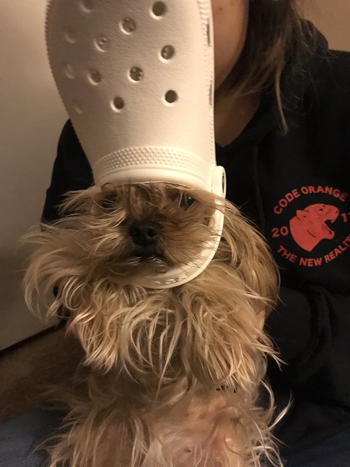 dog with a white croc hat