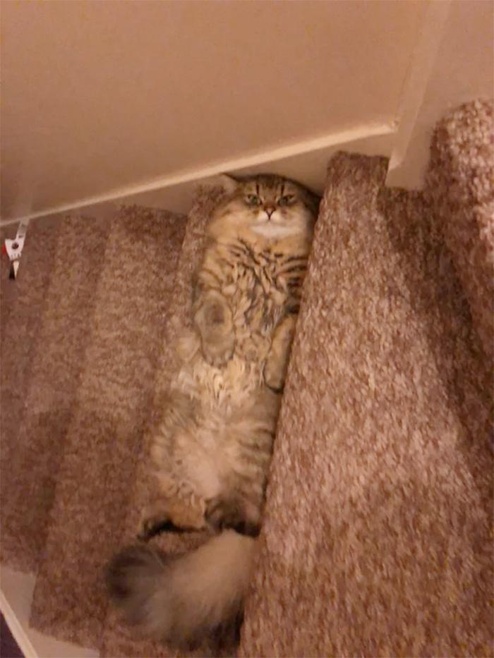 fluffy kitty lying on steps