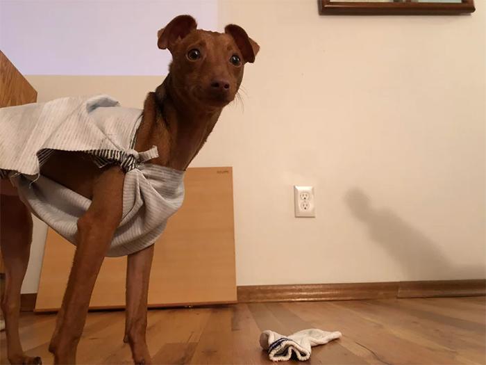 funny dog cosplay dobby harry potter