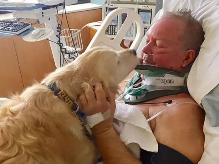 golden retriever licking the face of a patient in hospital