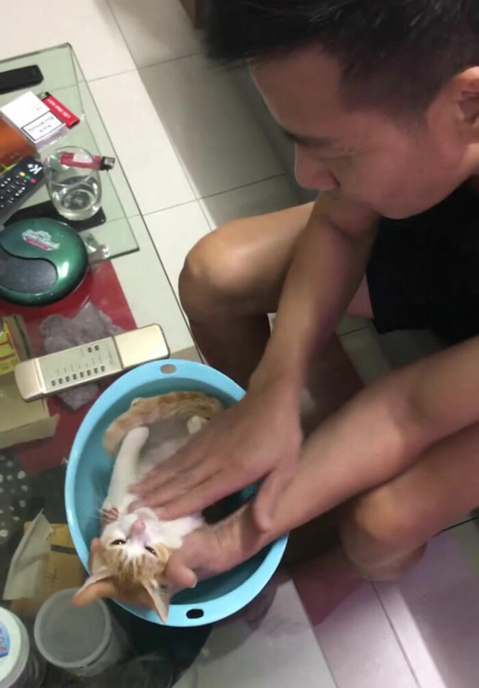 grandfather-to-be massages the cat's belly during newborn bathing demonstration