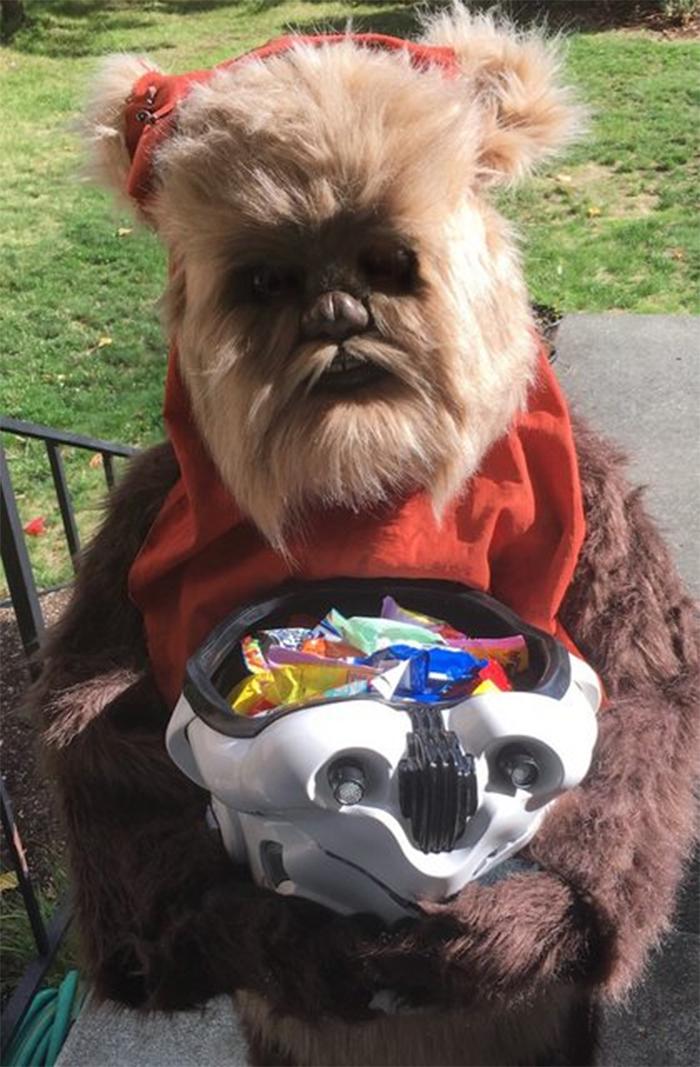 halloween costume ideas ewok star wars