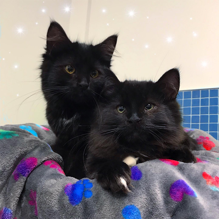 kittens up for adoption tales and taylor