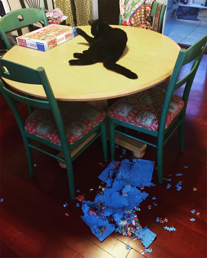 kitty destroys finished puzzle