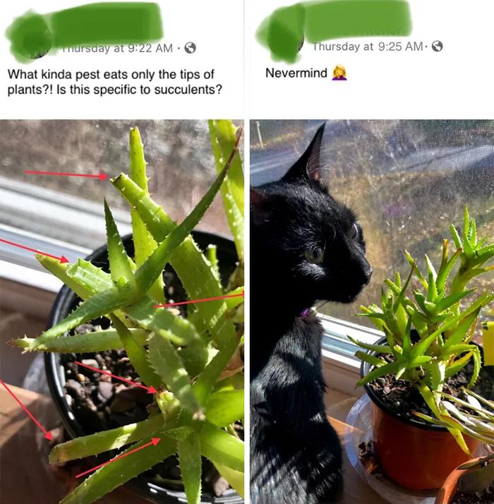 kitty eats succulent tips