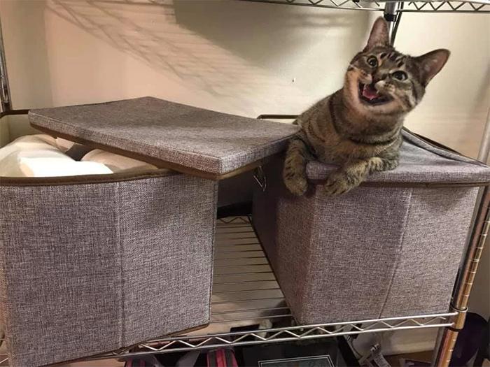 kitty found stash of toilet papers
