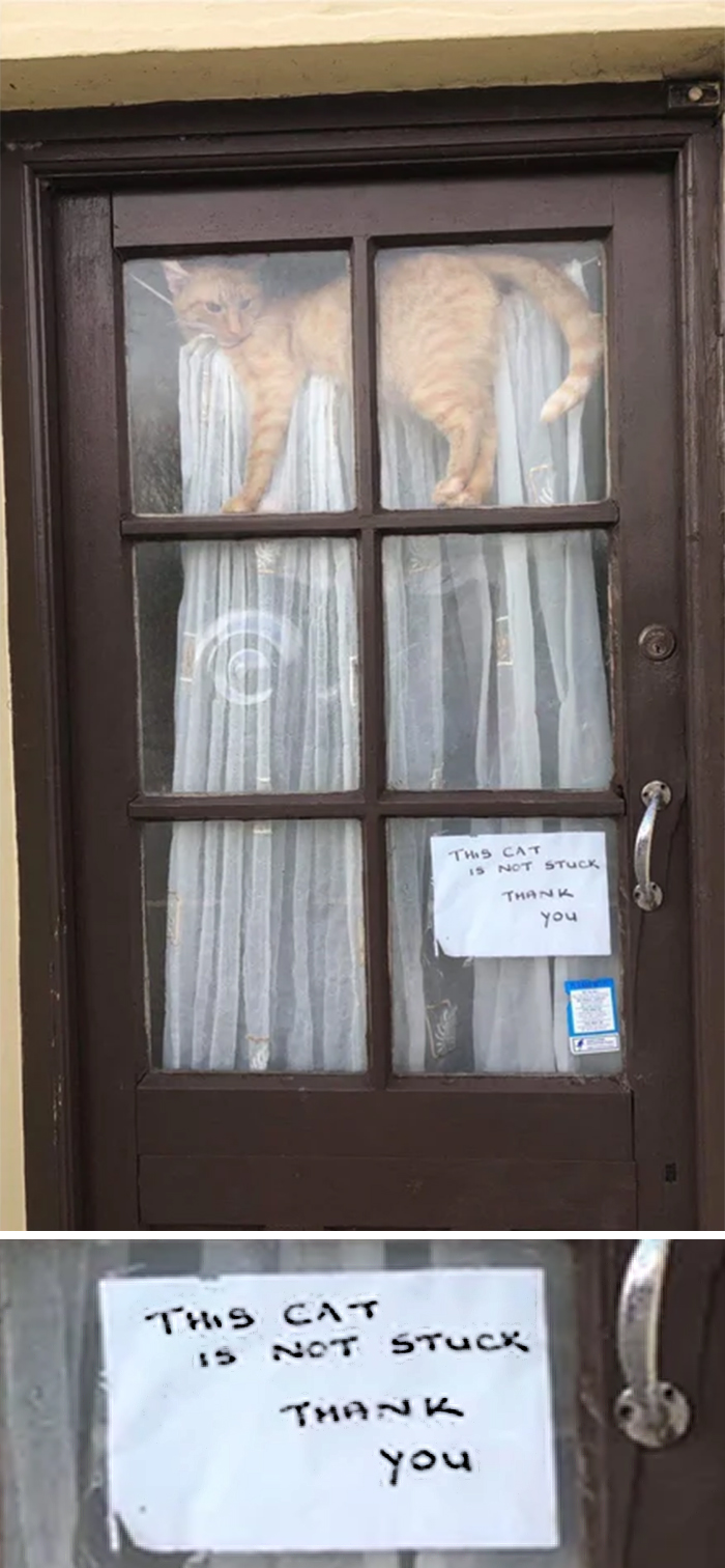 kitty is not stuck door sign